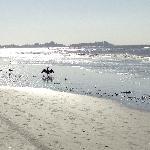 Beach_Cormorant posing