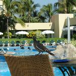 By the pools, just sit back and relax, feed the bird!