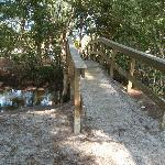 The brook & bridge