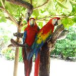 Parrots at the sanctuary