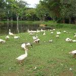 Lago no Parque das Águas de Caxambú