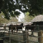 Barn area