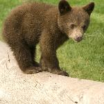 Bear Country USA - Rapid City, SD