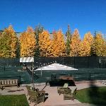 Golden aspens on a bluebird autumn day