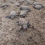 Baby turtles who just hatched :)