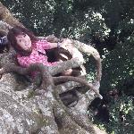 At the top of the hollow tree