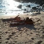 Relaxing on the Beach...