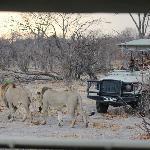 Foto de Sango Safari Camp