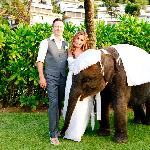 Baby elephant at wedding