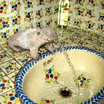 Ceramic sink with famous Guanajuato frog