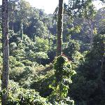 Rain Forrest from canopy walkway