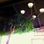 Two ficus trees grow inside the cafe.