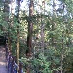 The Treetops Adventure lets you get up close and personal