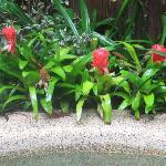 Bromiliads by the pool