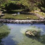 Bridge across garden ponds
