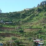 Terrace cultivation...
