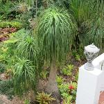 beautiful ferns, bromeliads and orchids in the garden