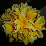 Fresh frangipani arrangement