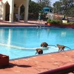 even local inhabitants come to pool!!!!