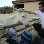 Al Areen Wildlife Sanctuary