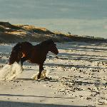 Outer Banks Wild Horses on a cold Nov day.