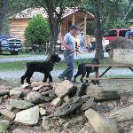 Pet Friendly Campground