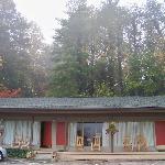 Woods behind the inn
