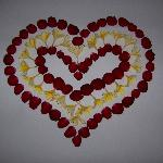 Fresh roses on the bed in the shape of a heart