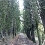 La strada che da Santa Rosa porta al Trebbio