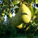 Obst vom eigenen Garten