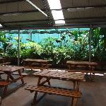 Garden Area in camp kitchen