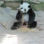 Lin Hui, geb. 28.08.2001