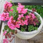 Geraniums and flowers decorate each area