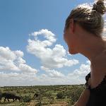 наблюдение за стадом слонов