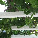 Who has grapes hanging from your private balcony?!