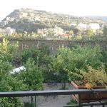 View of mountain and lemon garden