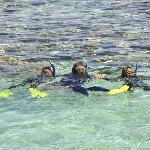 family snorkelling sessions