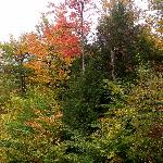 Trees right outside our room beginning to turn fall colors--in Streamside Building--4th floor