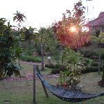 Vue du balcon sur le jardin