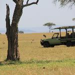 Lunch on the Serengeti Plains