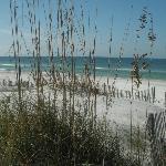 The beach on the gulf - min. walk down path opposite