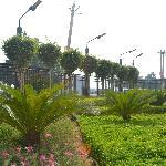 Garden surrounding Savoy Suites