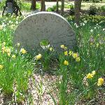 Spohr Gardens