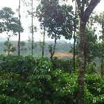 view from coffee estate