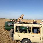 this cheetah experience was amazing!