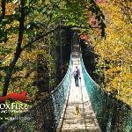 Foxfire Mountain Swinging Bridge