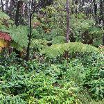 Jungle flora surrounding the Inn