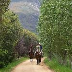 Fantastic horses, magnificent trails - the best horse riding in the Western Cape