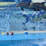 Acuario Nacional de Cuba Dolphin Show.