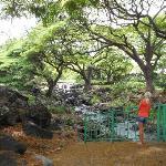 Lili' uokalani Botanical Garden